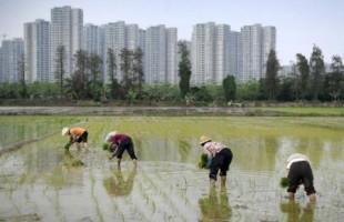 تردي مستويات التلوث بزراعات الصين رغم الحد من المبيدات والمخصبات