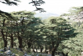 Cedar-Reserve