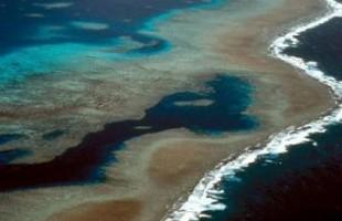 تقرير ينتقد سوء حالة الحاجز المرجاني العظيم قبالة سواحل استراليا