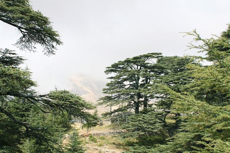 وادي قاديشا - الأرز - لبنان